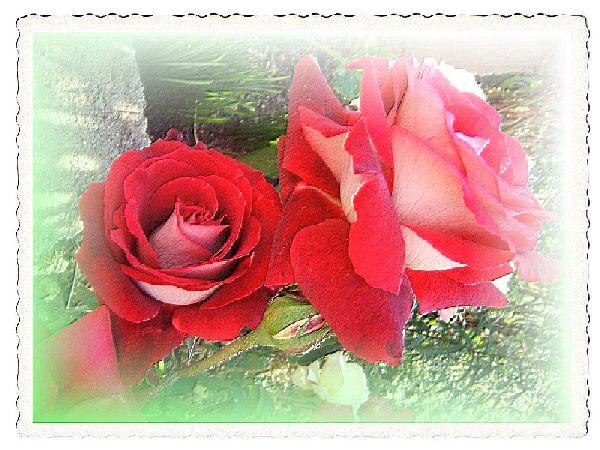 Cartes de fleurs imprimer sans texte les papiers de - Photo de fleur a imprimer ...